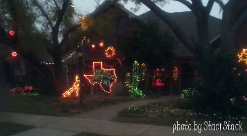 Cactus Christmas lights (photo by Staci Stack)