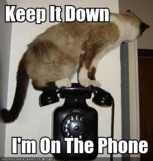 cat calling on phone