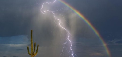 cactus_rainbow